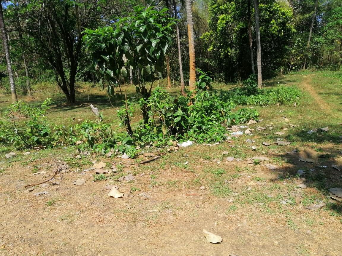 Land for sale in Velur,Thrissur.