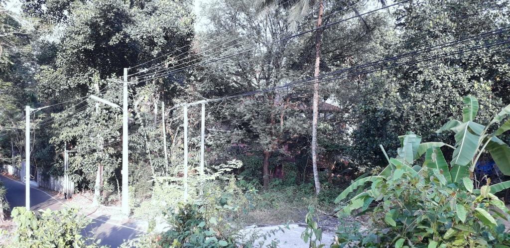 Photo No. 10