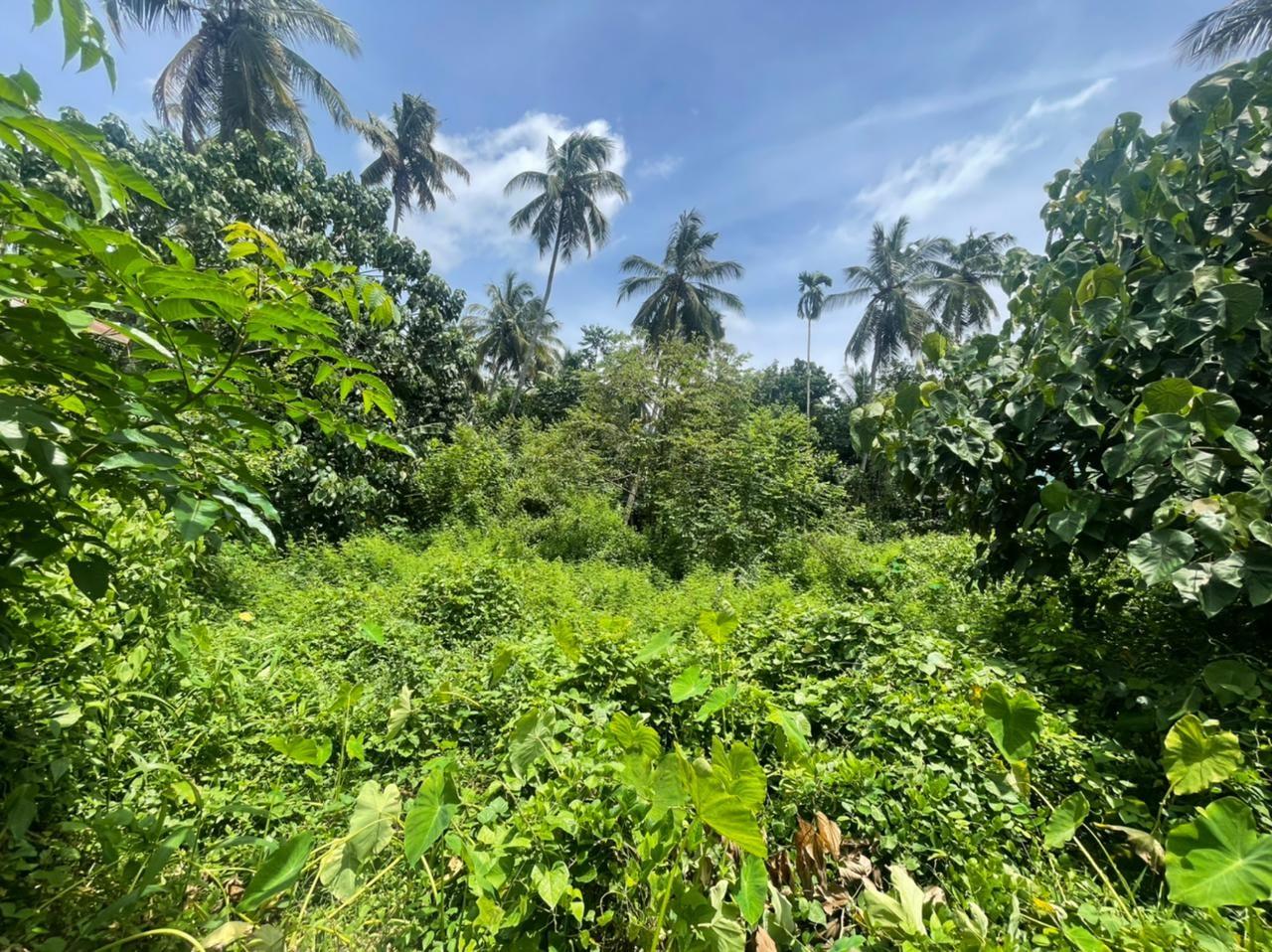 14.5 cent residential land for sale in Kariattukara
