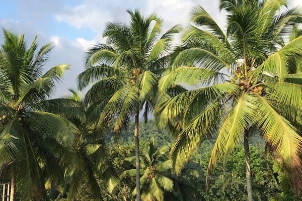 കോഴിക്കോട് Thriuvampady yil ഏകദേശം 2.5 aker Land for sale